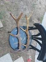 Két szarvas agancs, a szék 41 cm átmérőjű...