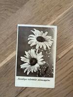 Szívélyes Üdvözlet Névnapjára képeslap