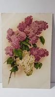 Régi orgona virágos képeslap, üdvözlőlap, levelezőlap