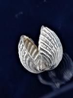 Ezüst kagyló doboz