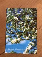 Virágzó FA, természet, évszak képeslap - 3