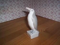 Pingvin, Aquincum, ritka