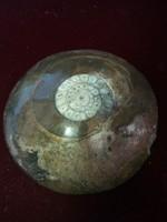 Gyönyörű Ammonitesz