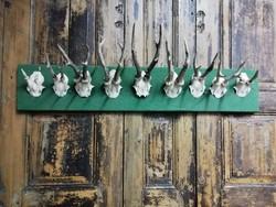 Trófea gyűjtemény, szarvas agancsokból a 70-es évekből