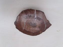 Polished ammonite