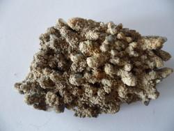 Transylvanian mineral, mine flower