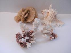 Sea coral, snail shell, desert rose