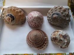 Beautiful sea snails