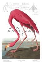 Amerikai rózsaszín flamingo madaras nyomat, J. J. Audubon Amerika madarai 1826-38 vintage reprint