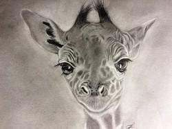 Animal good faces! Giraffe portrait, graphics, on paper, signed, single copy, glazed frame