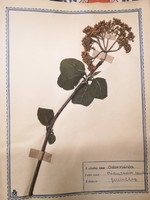 Plant Collection 1957-1960