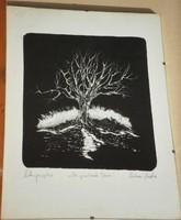 Olvashatatlan jelzés (20.sz.második fele) - A beszélő fa