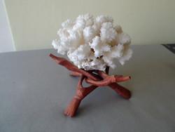 White sea coral ornament for sale!