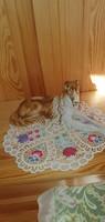 Royal dux dog